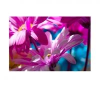 Colored Daisy 6