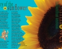 History of the Sunflower