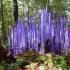 Neodymium Reeds on Logs