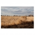 Field and Farm 1