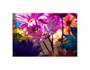 colored_daisy_2_300x232